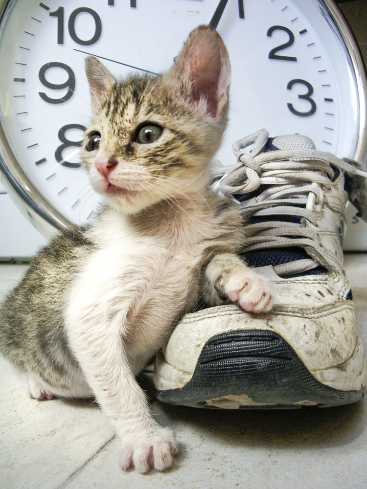 A kitten and a shoe