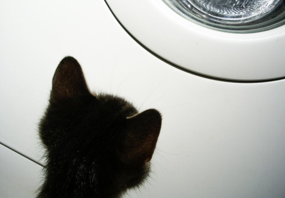 A Cat and the Washing Machine