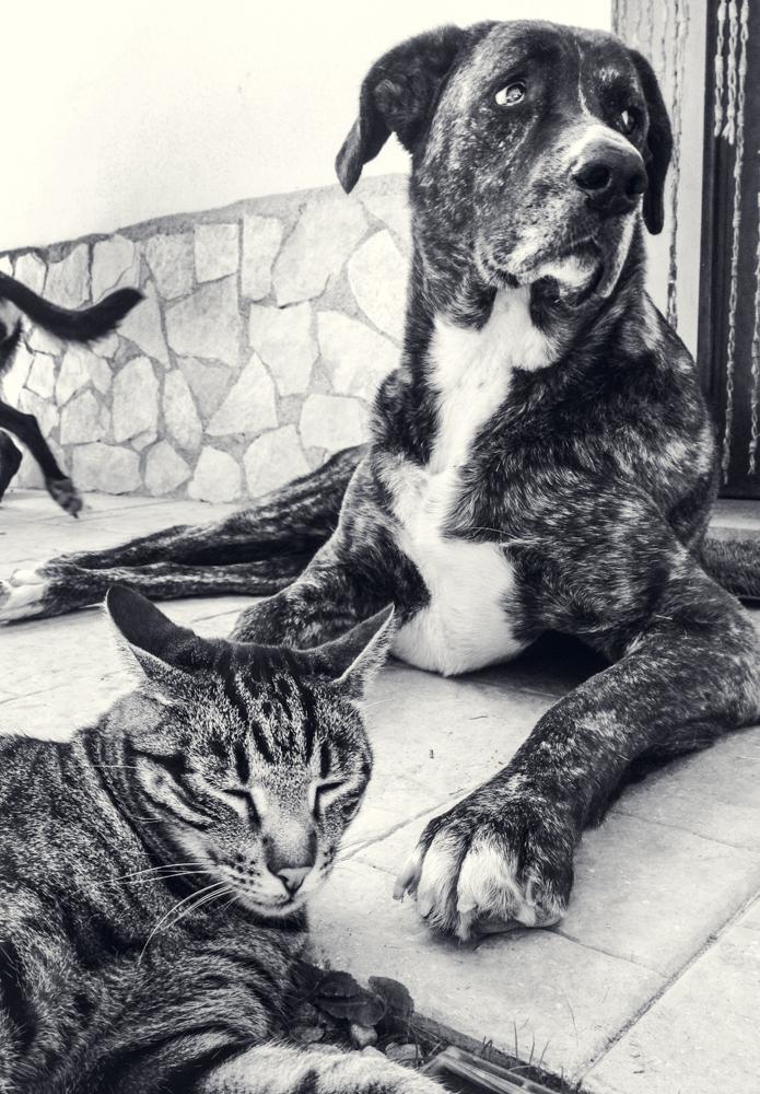 Cat&Dog