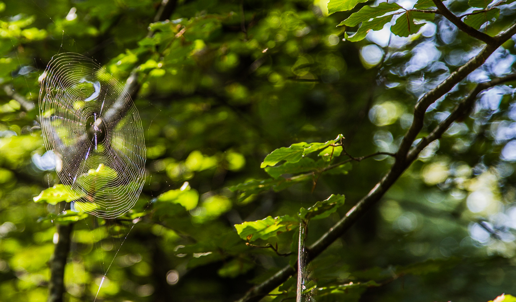 A web in the forest